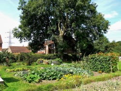 Home grown vital green goodness